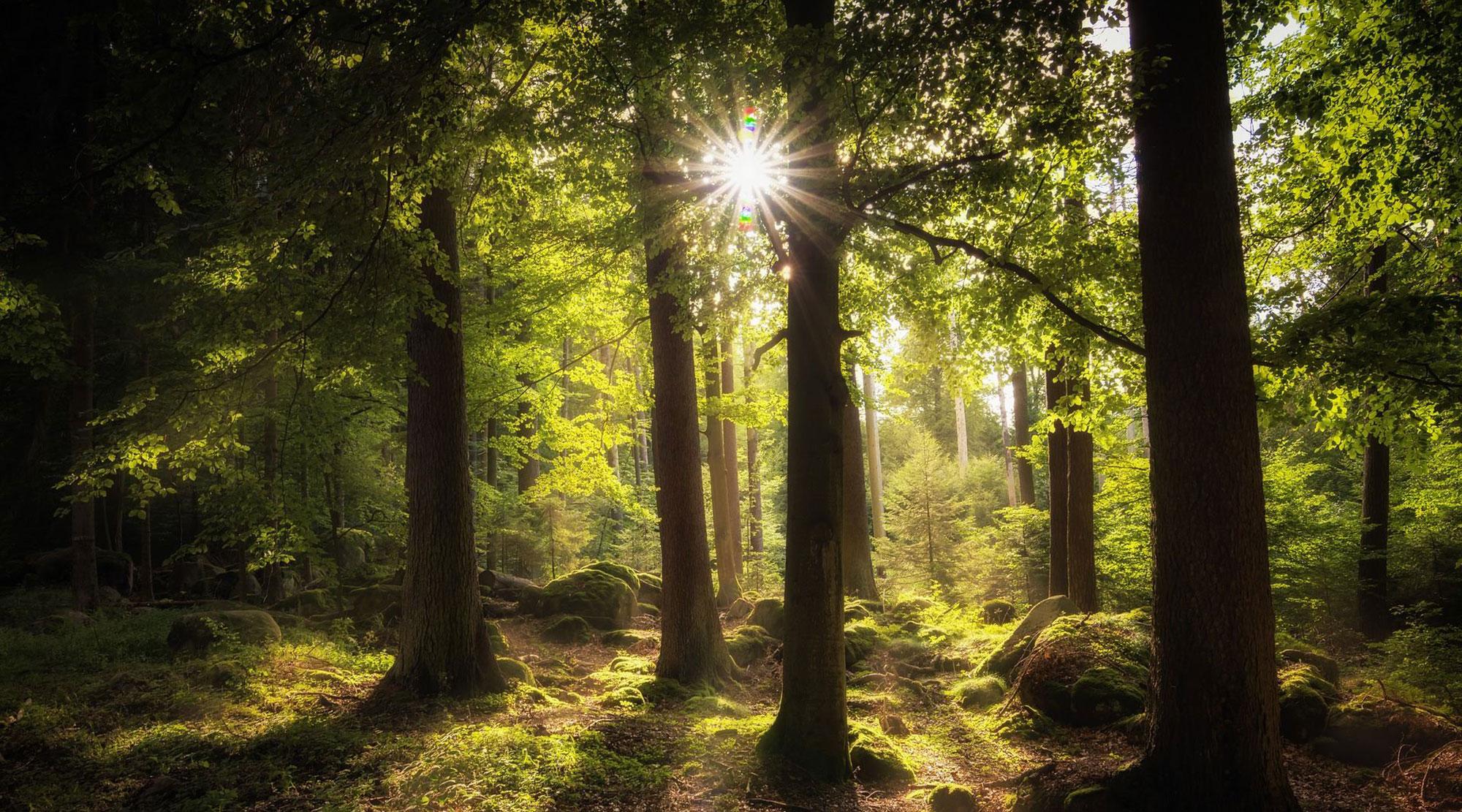nordam produits forestier environnement